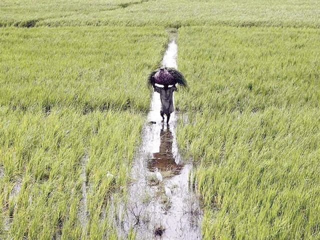 Scientists say Indian farmers draining Pakistan's waters