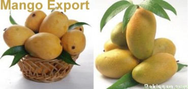Mango Export from Pakistan and WTO Regime on Food & Agriculture
