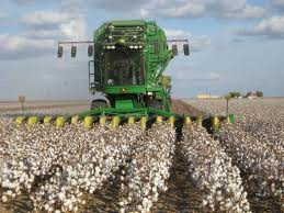Local industry to get sufficient cotton