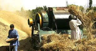 Pakistan. 'Punjab likely to achieve wheat production target'