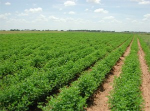 UAE interested in joint ventures in agricultural sector