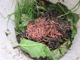 A Way to Recycle Food Waste: VERMICOMPOSTING