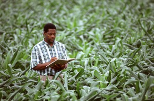 Total Disinformation Awareness: Monsanto Suppresses Research On GMO Crops