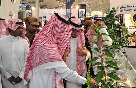 Saudi Arabia's food and agriculture sectors maintaining annual 18.5% growth