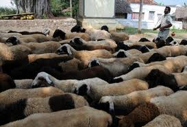 "Sheep Farmers Increase Incomes By 80% After USAID's ""Best Practice"" Business Training"