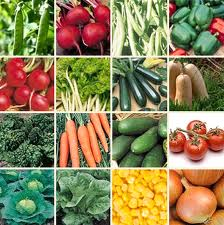Profitability of vegetable cultivation