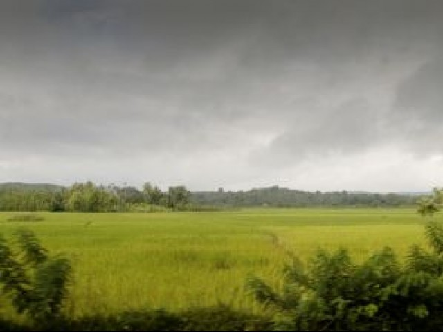 Monsoon: Ongoing rain spell a boon for Potohar farmers