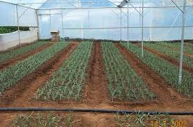 Production of High Value Crops Under Controlled Environment
