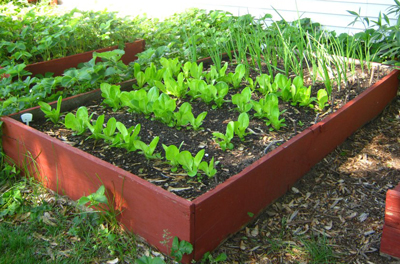 ... Agribusiness Training How To Grow A Salad Garden For The Whole Family Design Ideas