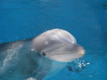 India Declares Dolphins Non-Human Persons, Bans Holding Them in Captivity