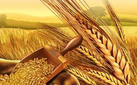 Wheat stocks: Punjab, Khyber Pakhtunkhwa, Balochistan witness substantial decline