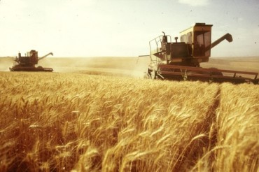 Russia's wheat prices up as EU export demand recovers