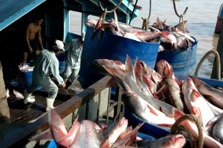 Seafood exports surge by $85.2 million