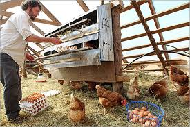Factory Egg Farming is controlled by BIG AGRIBUSINESS...