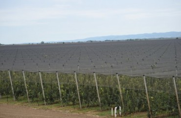 Delta Agrar expects apple production to rebound in 2013