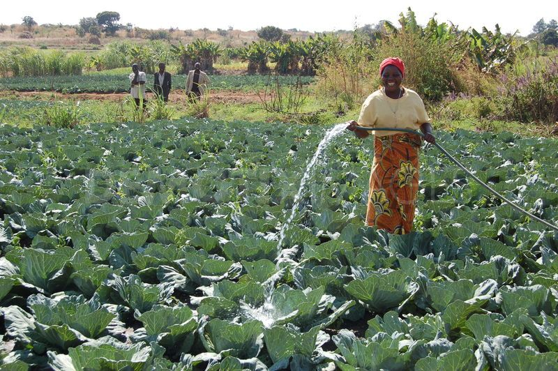 Irrigation can shield Africa's farmers from the effects of climate change