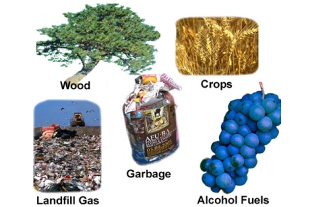 Biomass Power Generation Feasibility Study