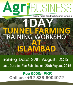 Tunnel Farming Training