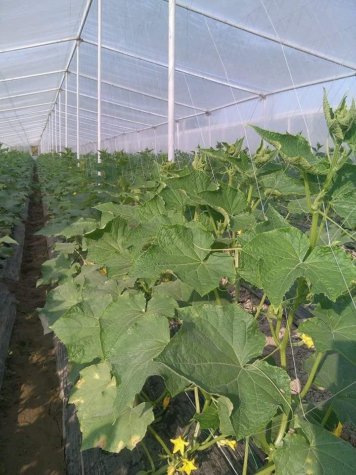 Tunnel farming training services in Pakistan