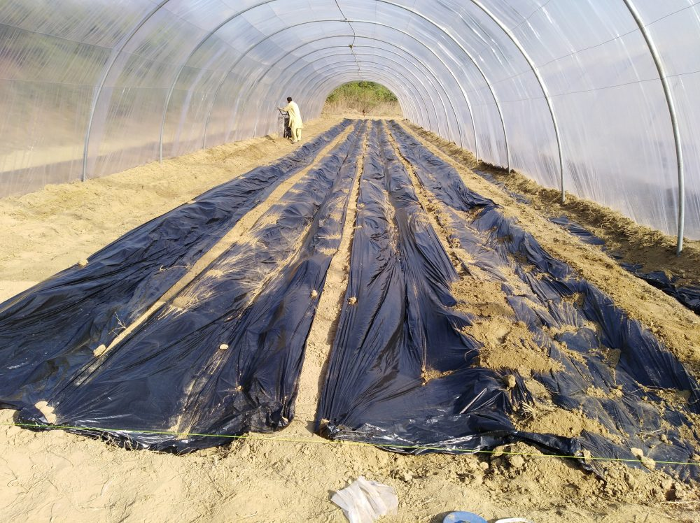How to start tunnel farming in pakistan