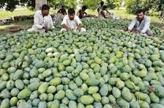 Mango Sweetens Pakistan Ramadan