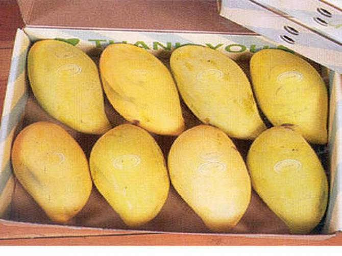 Mango export to US almost halted