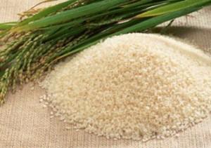 Pakistan rice export falls to 40 per cent
