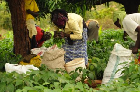 Cultivating youth entrepreneurship through agribusiness