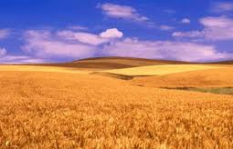 Wheat procurement to start in Punjab on May 1