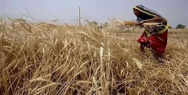 Pakistan eying 25m ton wheat production this year: Aulakh
