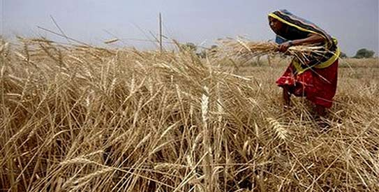 Pakistan eying 25m ton wheat production this year: Aulakh