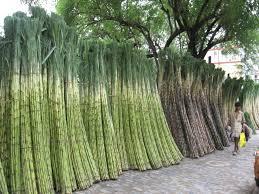 Sugarcane Varities Situation in Pakistan