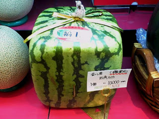 How to Grow Square Watermelons – Urban Farmer's Guide