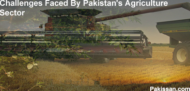 Challenges Faced By Pakistan's Agriculture Sector
