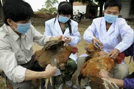 What the Chinese experience of bird flu can teach us