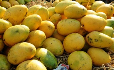 Taste of Pakistani mango' held in Seoul