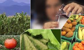 Food Security & Agriculture