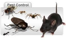 Total Pest Control Services