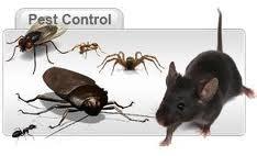 Total Pest Control Services