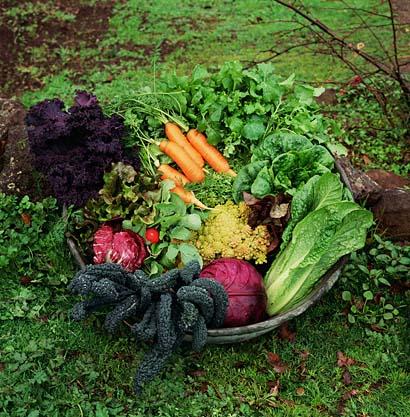 Planting a Fall Vegetable Garden
