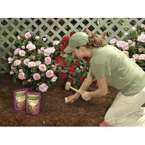 Fertilizing Roses