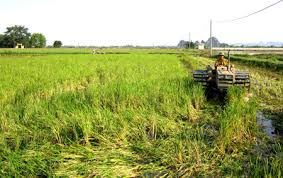 Promoting Sustainable Agriculture and Rural Development
