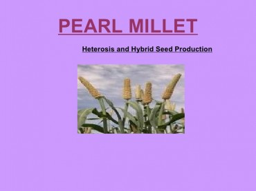 Pearlmillet heterosis and hybrid seed production