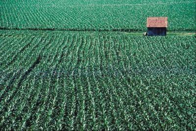 Advantages & Disadvanatges of Modern Crop Farming
