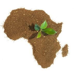 Quels leviers pour renforcer la sécurité alimentaire en Afrique?