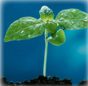Role of seed in crop production