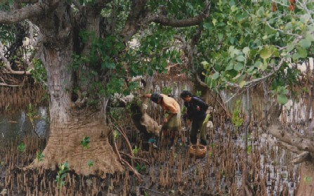 Forest Based Poverty Alleviation