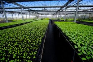 Improve The Production In AGRICULTURE