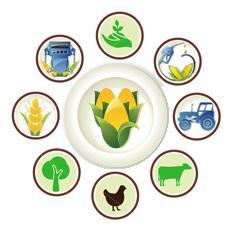 Directorate of Agricultural Information, Punjab
