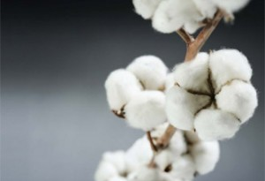 Cotton target missed by 1.3m bales